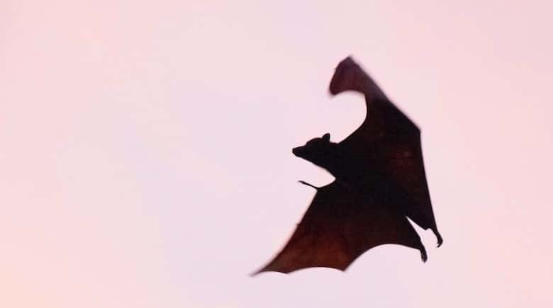 vampire bat halloween diy
